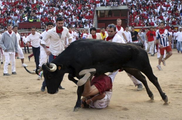 A heifer charges at a reveller after the last running of the bulls at the San Fermin festival in Pamplona July 14, 2011. There were no serious injuries during the run that lasted two minutes and 20 seconds, according to local news sources.  Source: Reuters